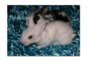 kvilla häxan kaninungar